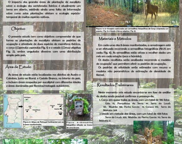 Ecologia espácio-temporal de ungulados em plantações de Eucalipto