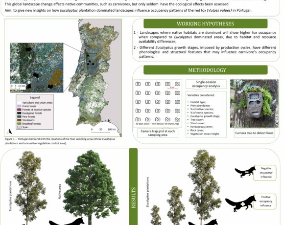 Determinants of red fox (Vulpes vulpes) occupancy patterns in Eucalyptus dominated landscape